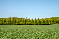 field and forest - Bornholm by Anders Beier